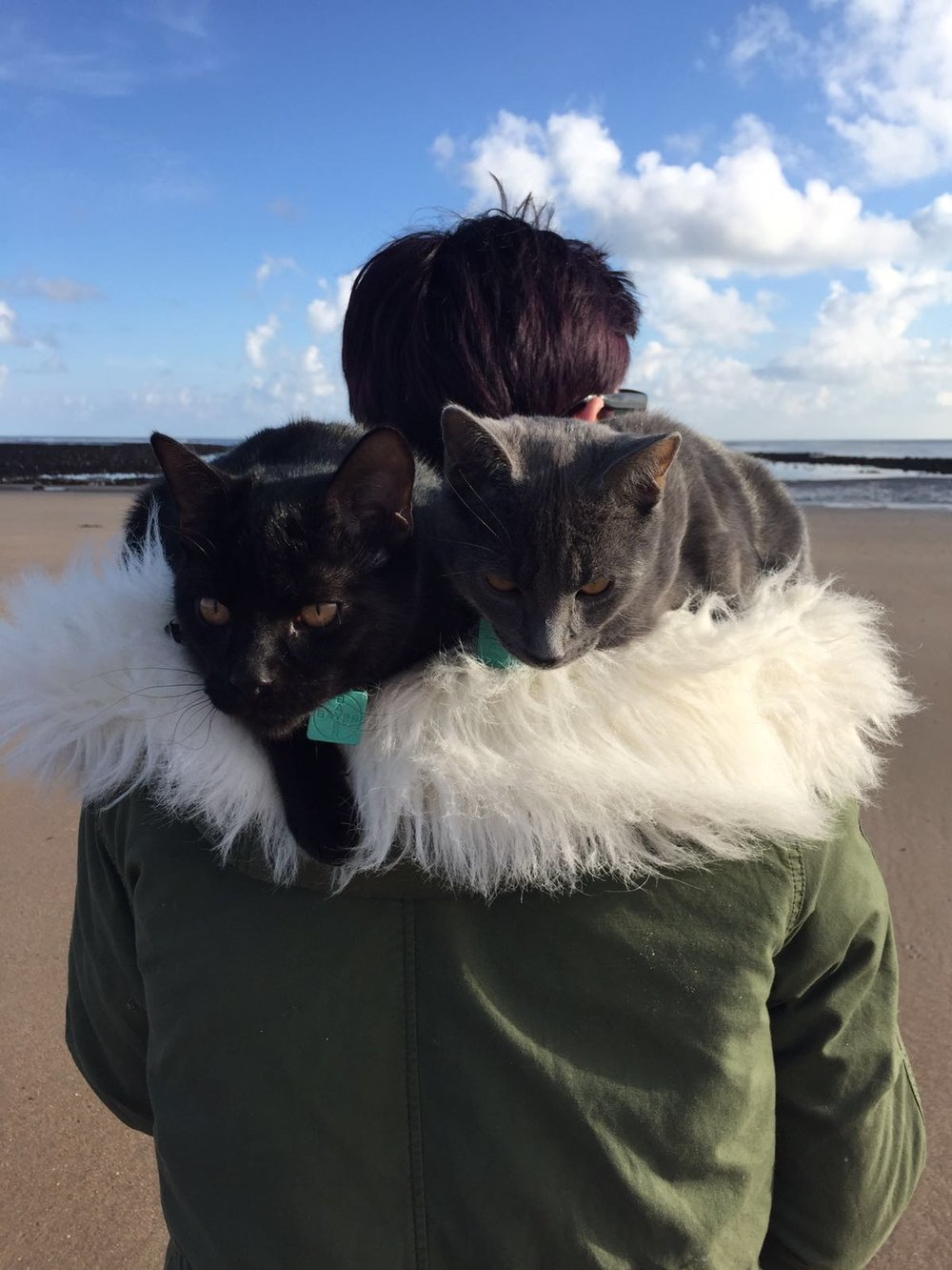 My Boys Hendrix & Gatsby on the beach with me in one of my favourite places Amble, Northumberland.
