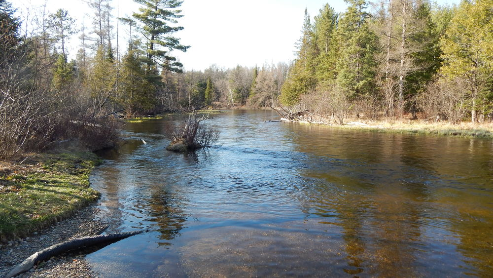 fly-fishing-the-fly-factor-wildlife-ausable-river.jpg