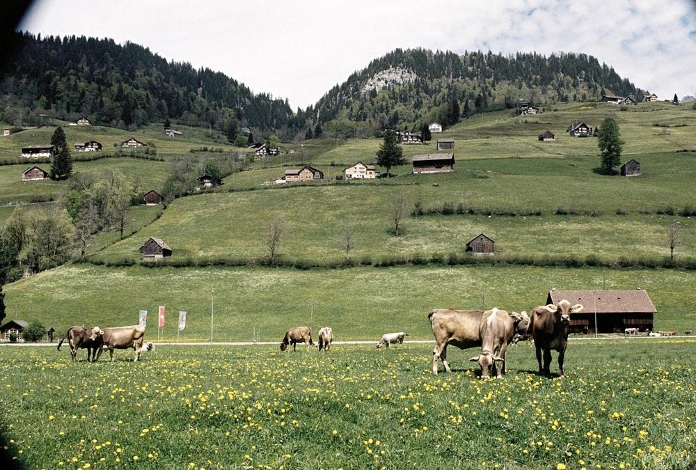 alt. St. Johann, Switzerland (2014)