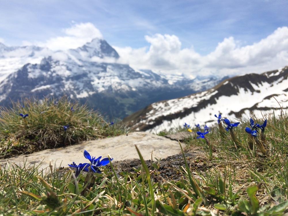 First - Bachalpsee, Switzerland (2015)