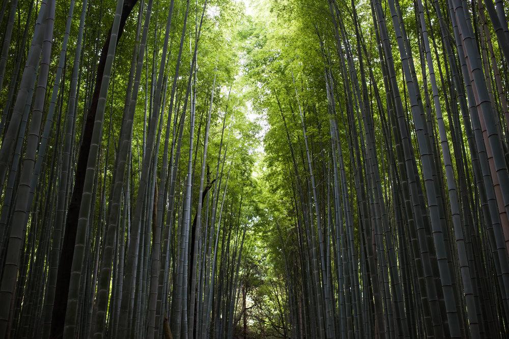Arashiyama, Kyoto, Japan (2016)