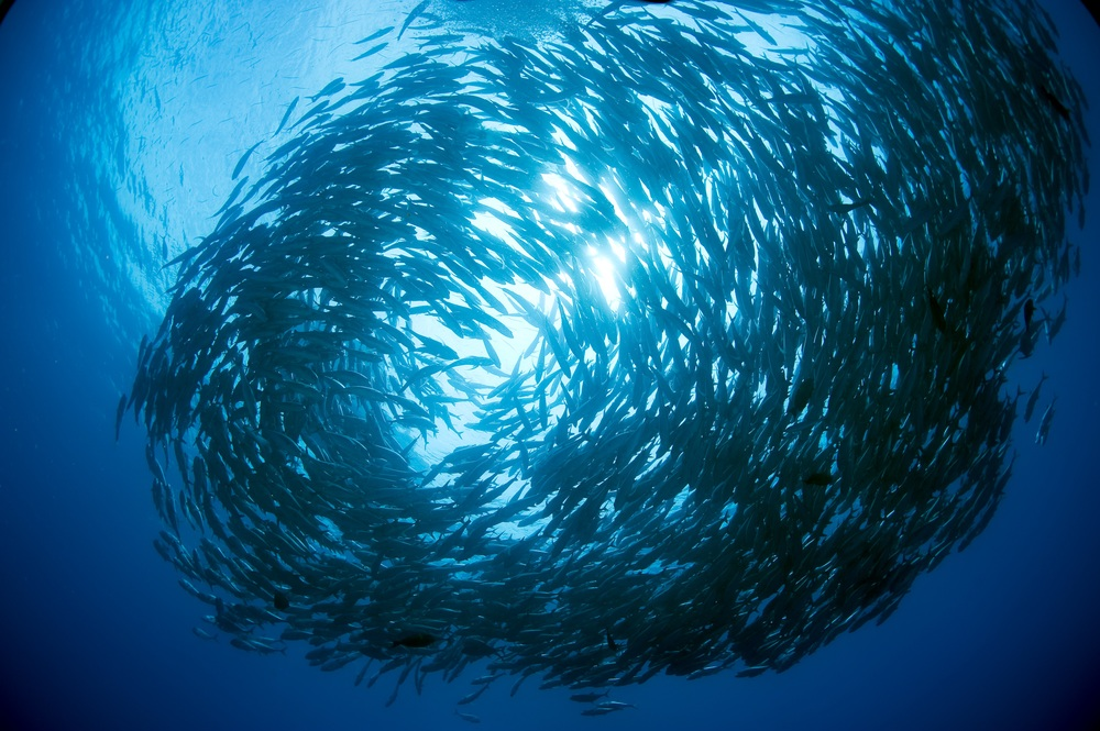 The Ocean is dying. We will run out of fish in the next 50 years.      10X20 Initiative. An Urgent Imperative: Marine Protected Areas.