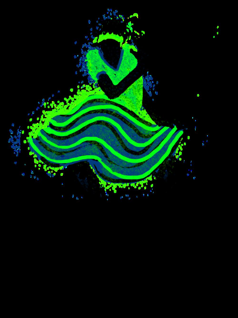 Dance D.png