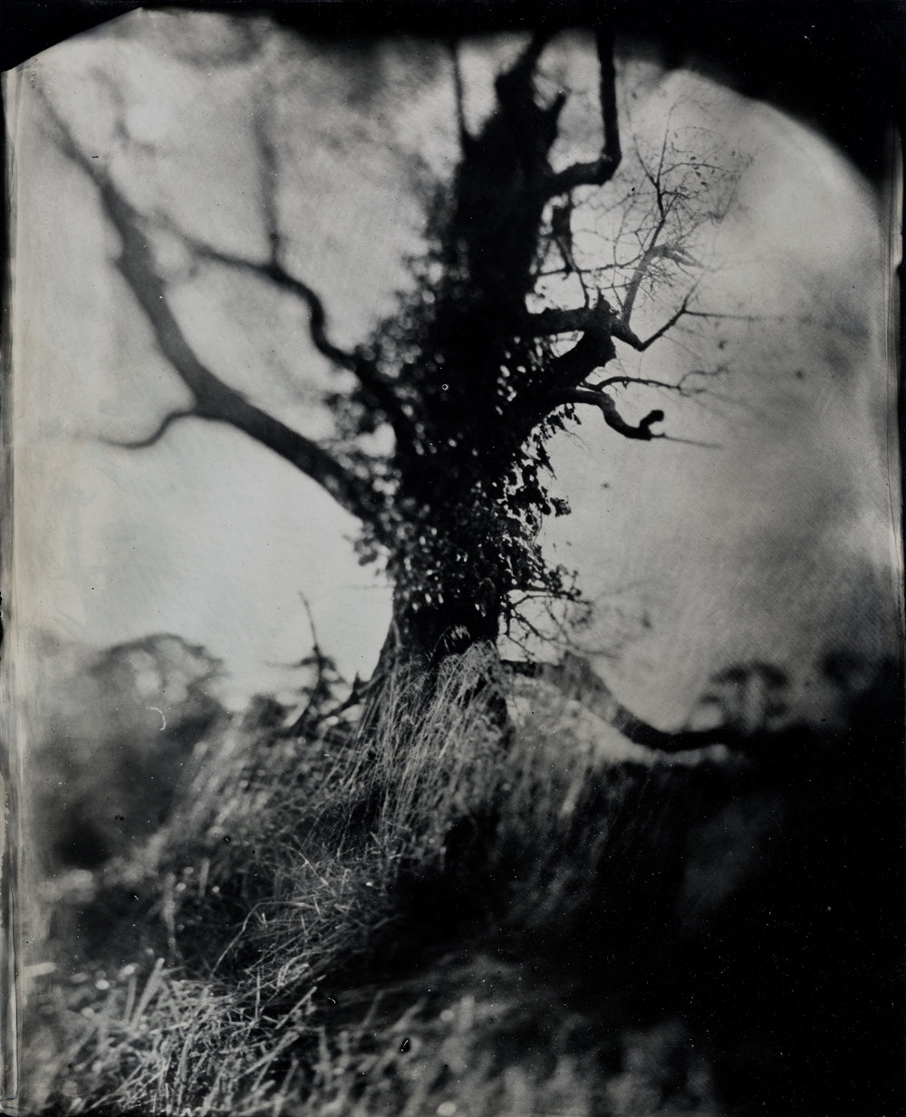 Bucks Landscape Study 5.jpg