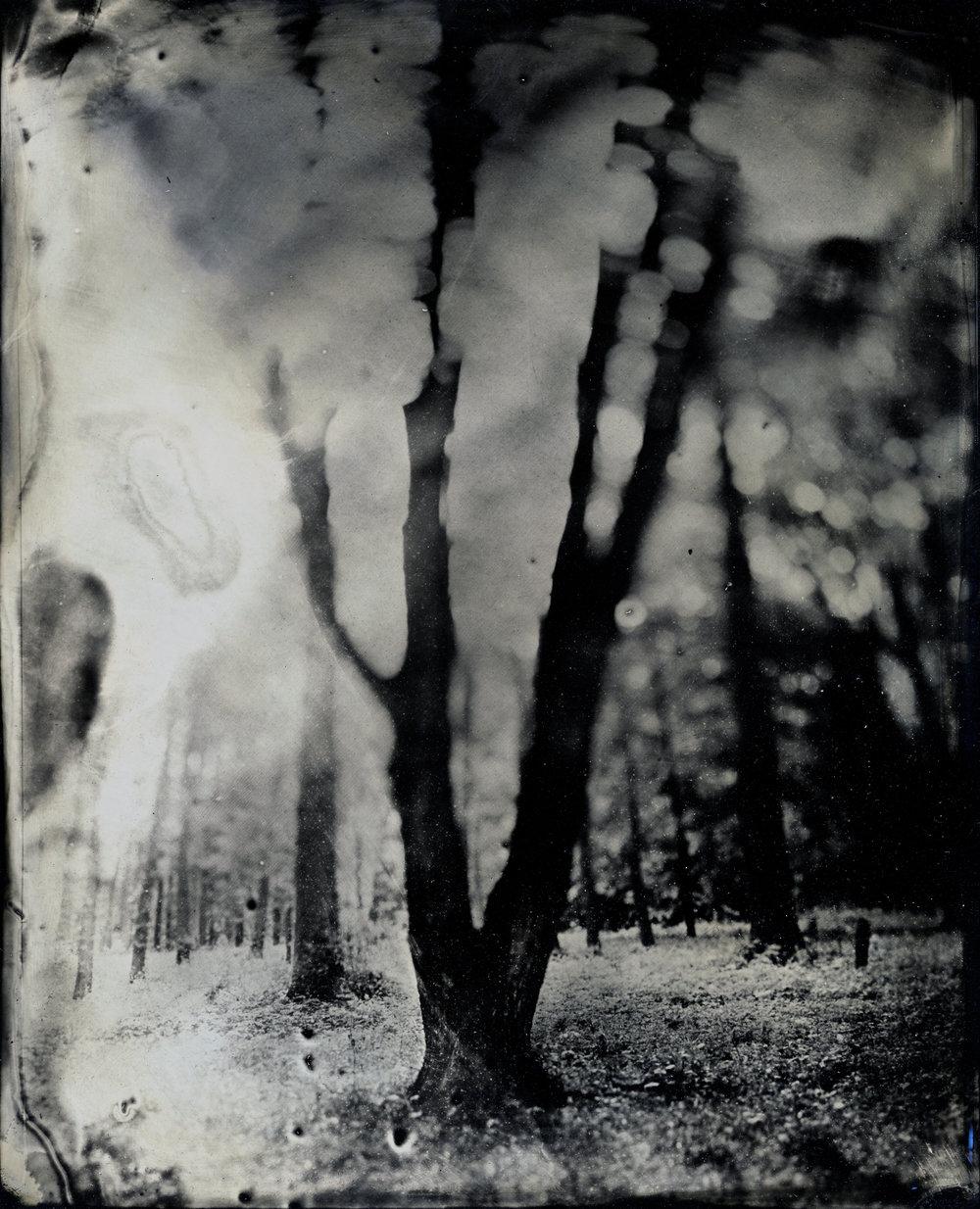 Bucks Landscape Study 3.jpg