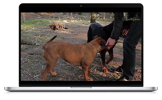 Uden video ville Dogwhisperer.dk ikke nå ud til den samme målgruppe. som de gør nu. Video har gjort en afgørende forskel i deres virksomhed.