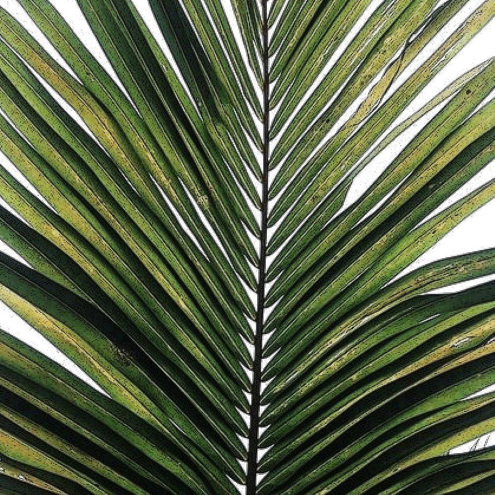tropical 3 copy.jpg