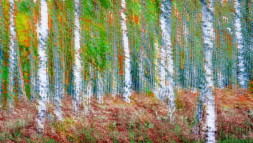 30x40--201110--Birken-color-impression-8738-rz-sh-sRGB.jpg