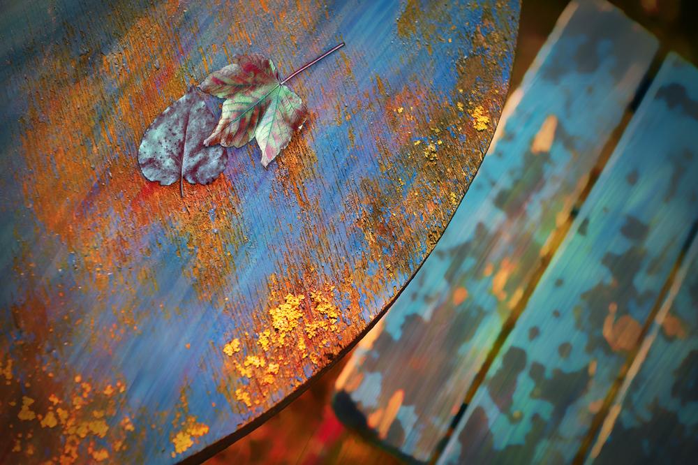 30x40--201110--table-chair-and-leafs-6302-sh-sRGB.jpg