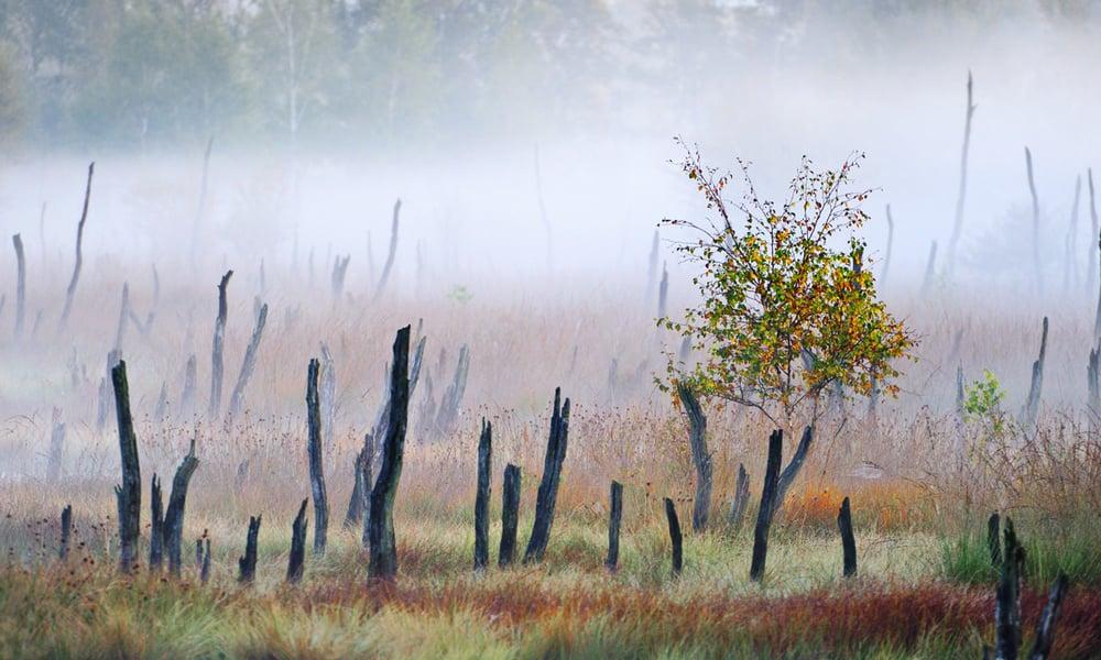 201009  morning mist Wittmoor 3450 man sh sRGB.jpg