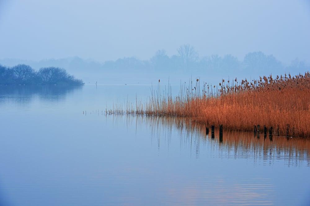 201402  reed in morning mist 9341 sh sRGB.jpg