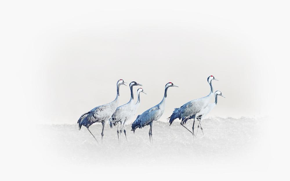 30x40  200810  alertly cranes art 4427 f rz sRGB.jpg