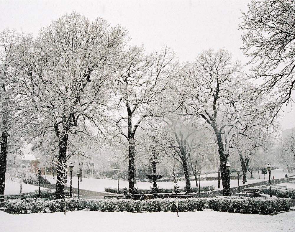 19.SnowTrees.jpg