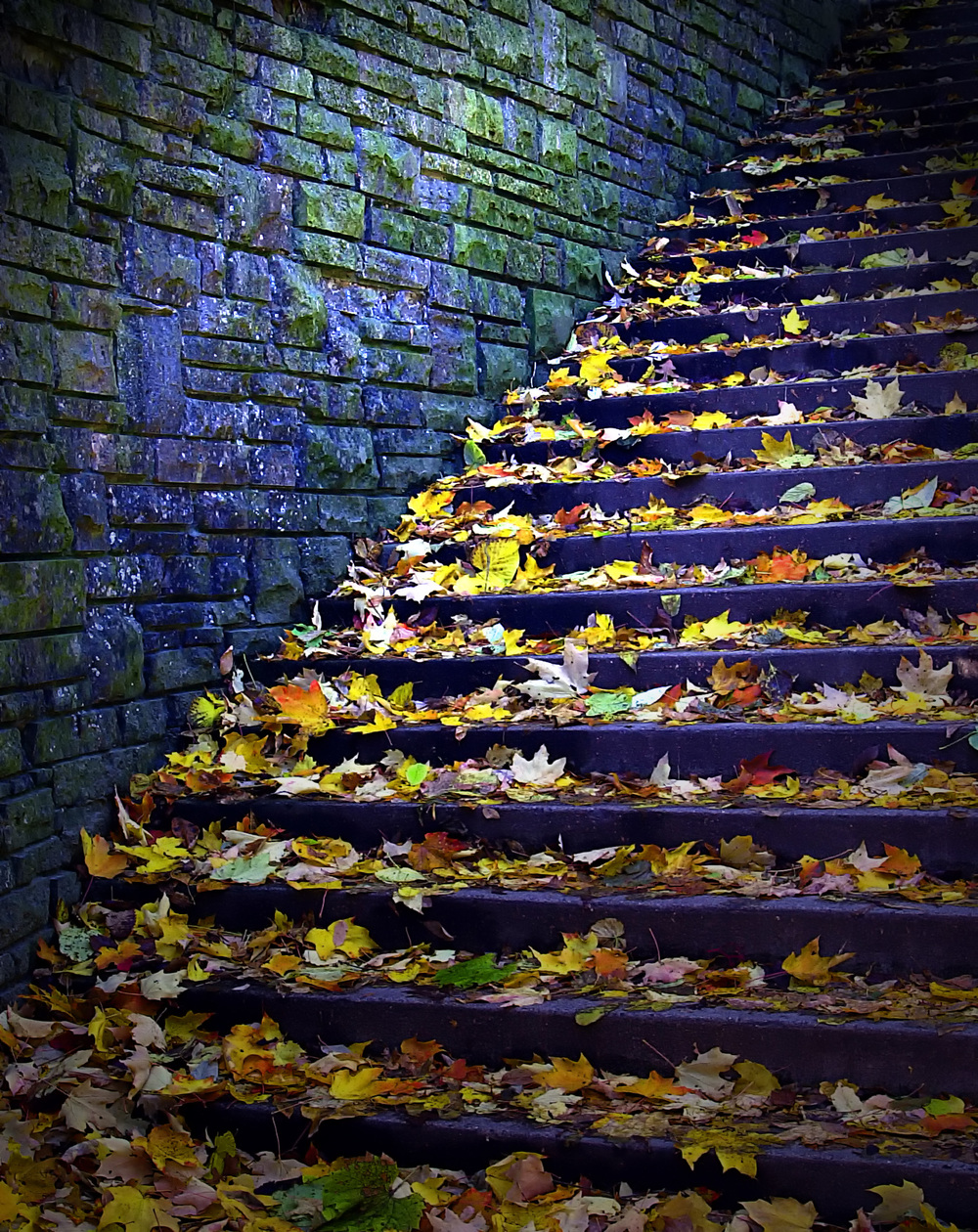 Fall Stairs Violet.jpg