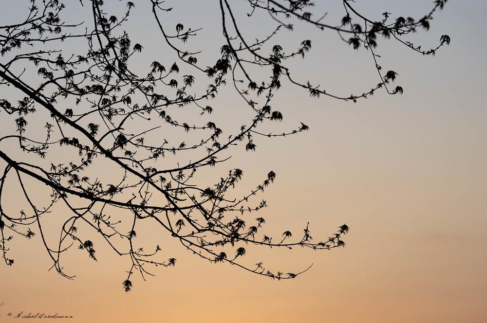 Branches_3796.jpg