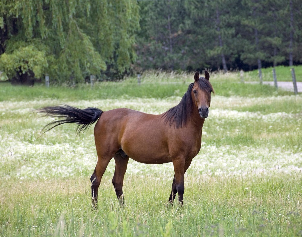 horse rogers.jpg
