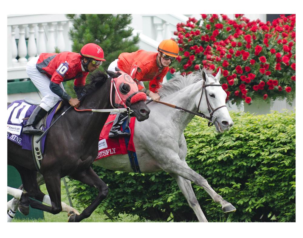Horses roses.jpg
