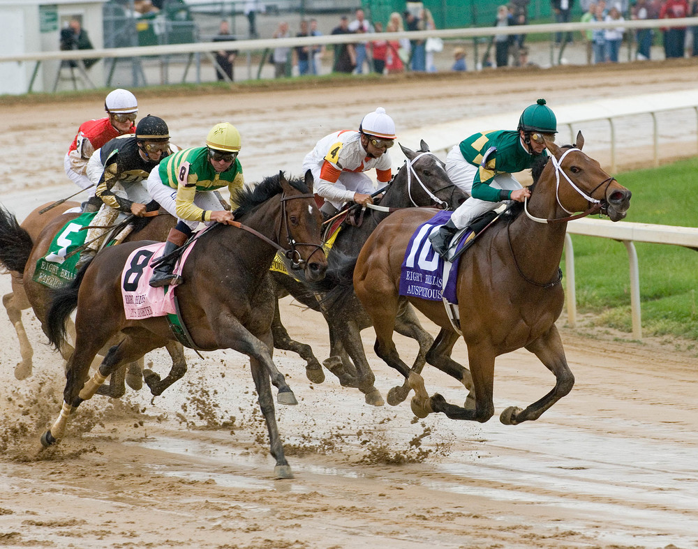 horses  mud 4.jpg