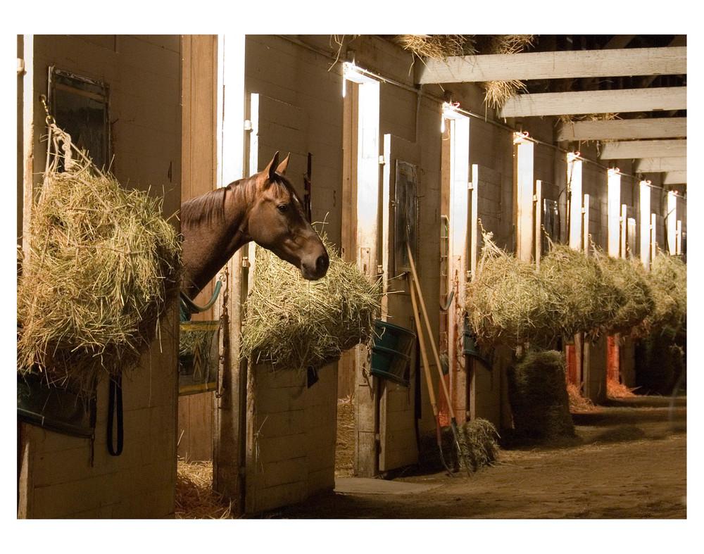 horse stall night.jpg