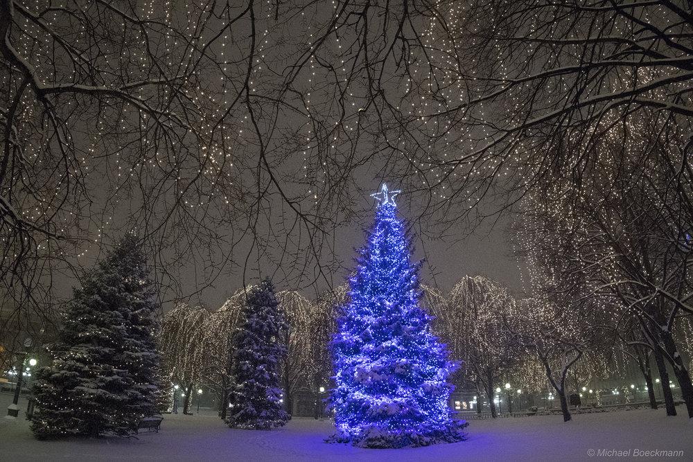 Blu Tree_6079.jpg