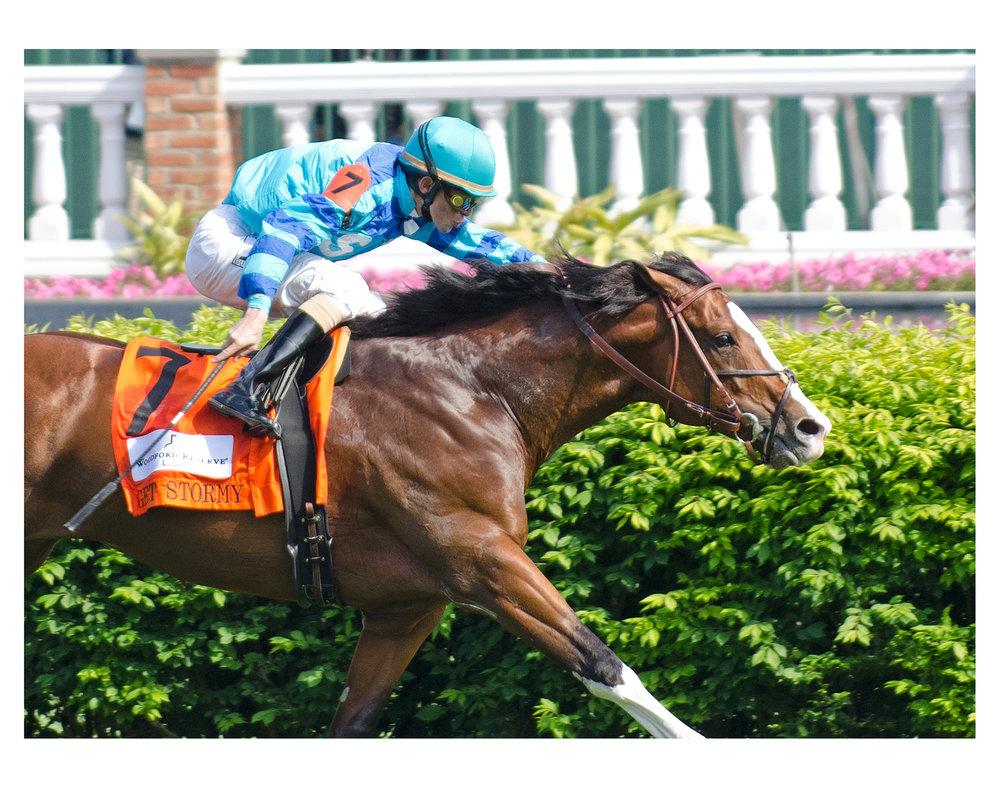horse muscle firm.jpg