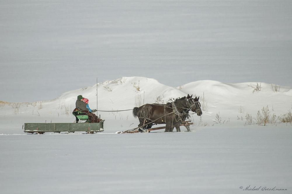 Horses and Sleigh_9878.jpg