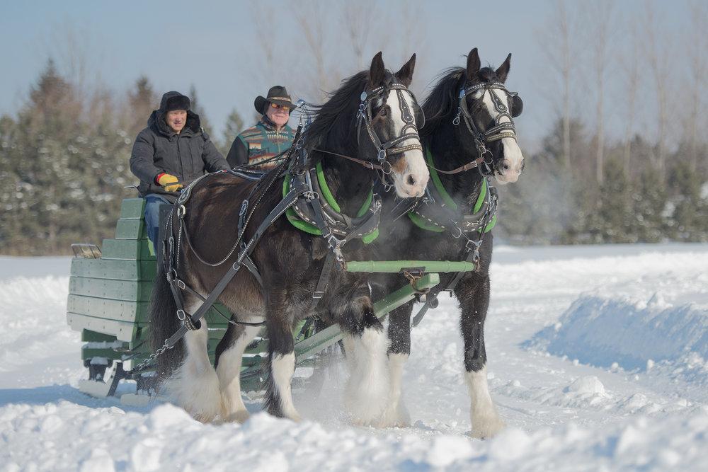 Horses and sleigh_9617.jpg