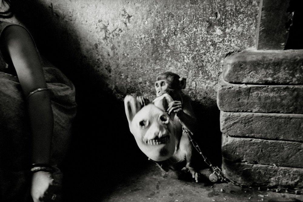 3.monkey.jpg