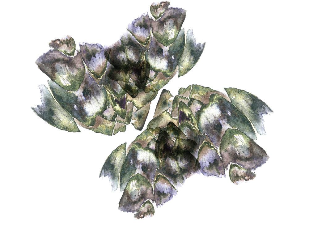 Artichoke Petals
