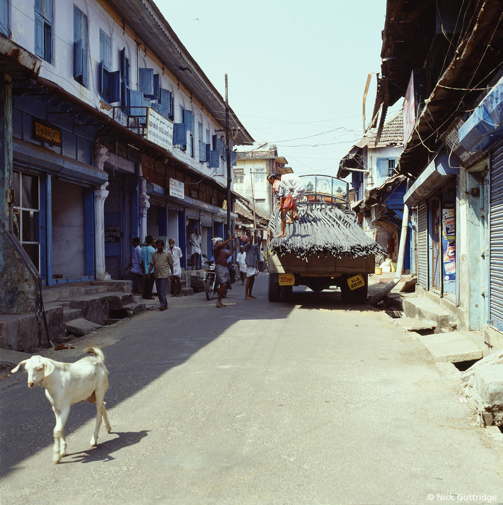 India Street with Goat.jpg