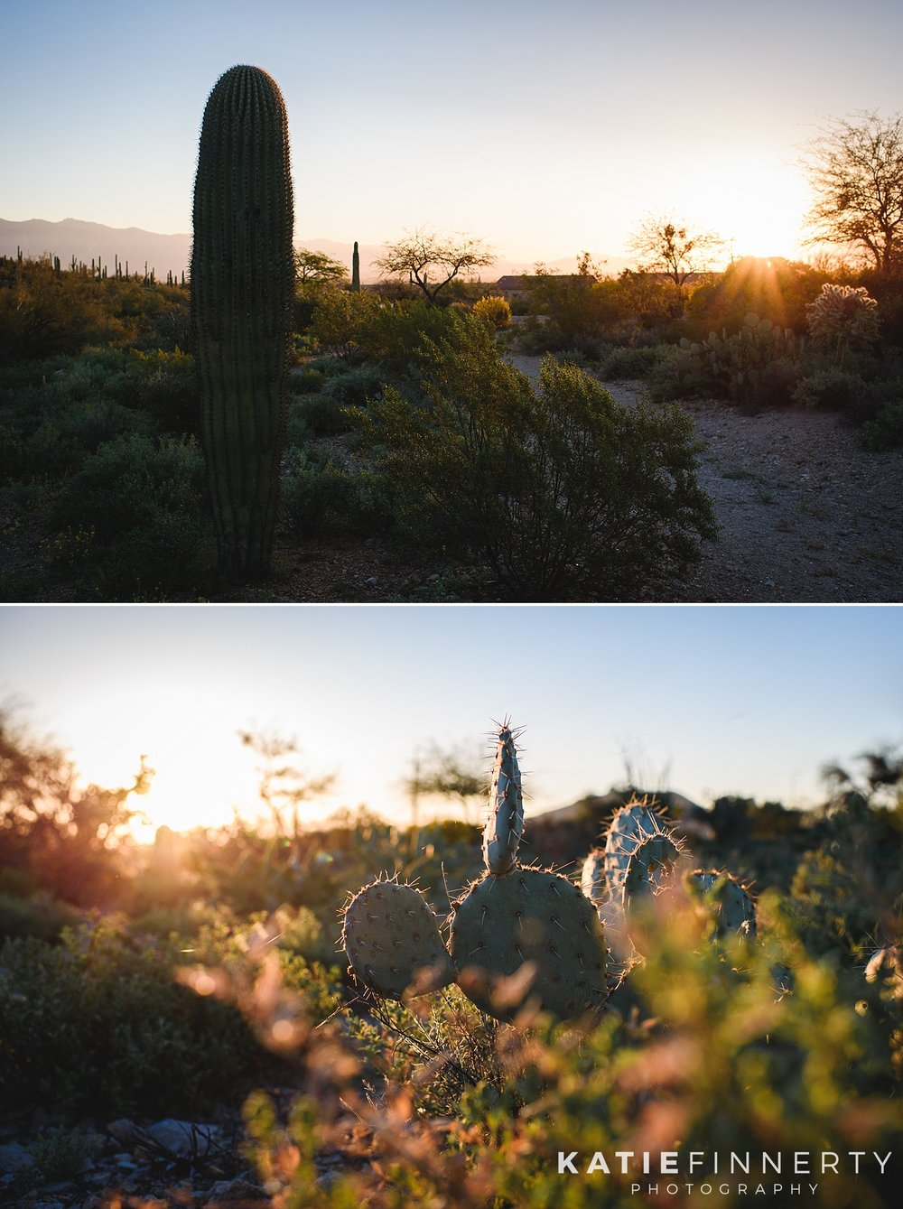 Sunrise Saguaro National Park Travel Photography