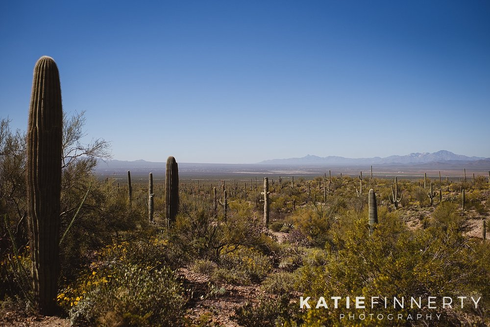 Saguaro National Park Desert Landscape Travel Photography