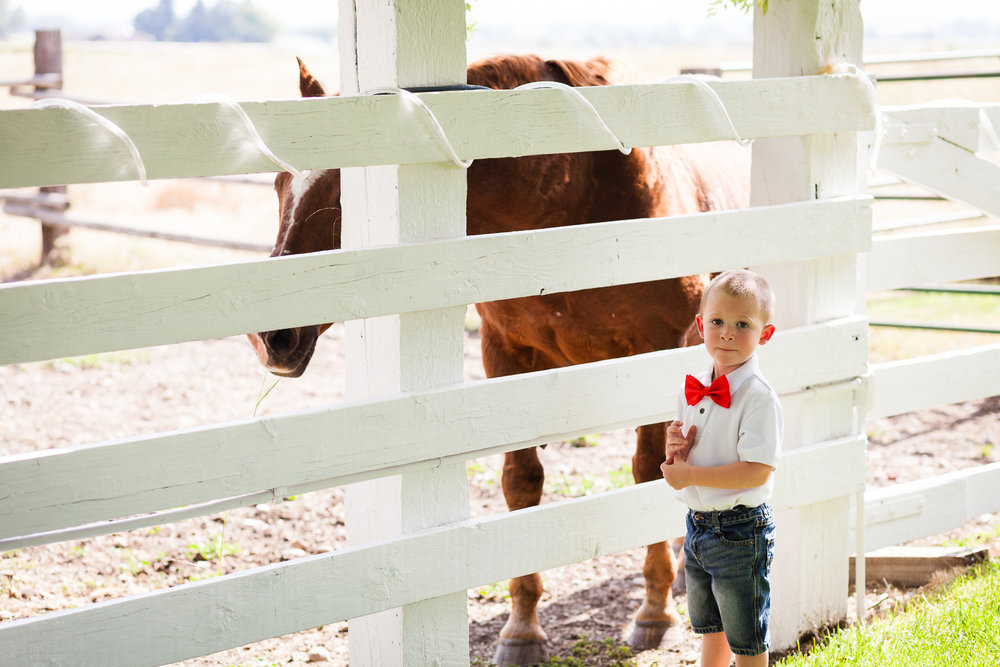 bozeman-montana-wedding-roys-barn-little-boy-visits-horse.jpg