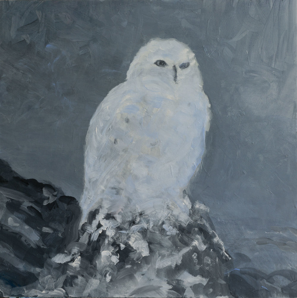 "Snow Owl,  acrylic on canvas, 24"" x 24"" 2014"