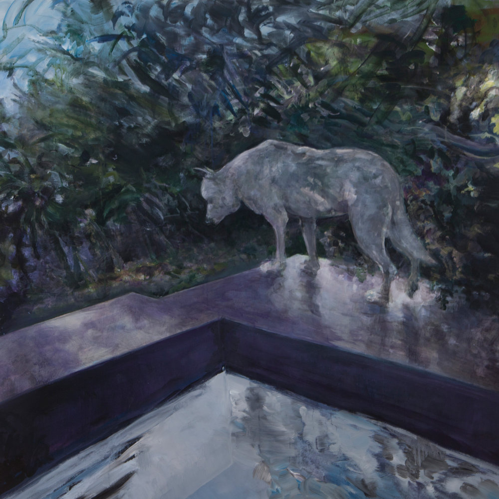 "Costa Rica Dog and Pool , acrylic on canvas, 48"" x 48"" 2015"