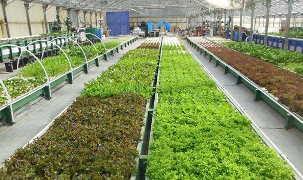 Great article on PBS this evening about aquaponics and the viability of the business.