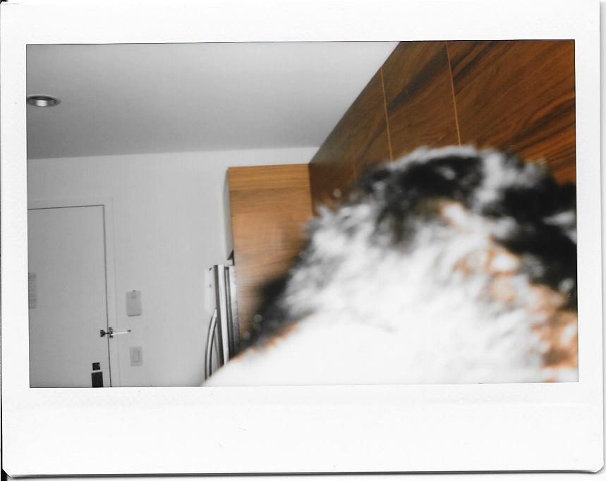 Polaroids-2015-021.jpg