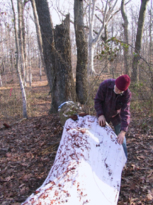 joe rubbing rainbow tree Feb 2006 copy.jpg