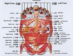 reflexologydiagram.jpg