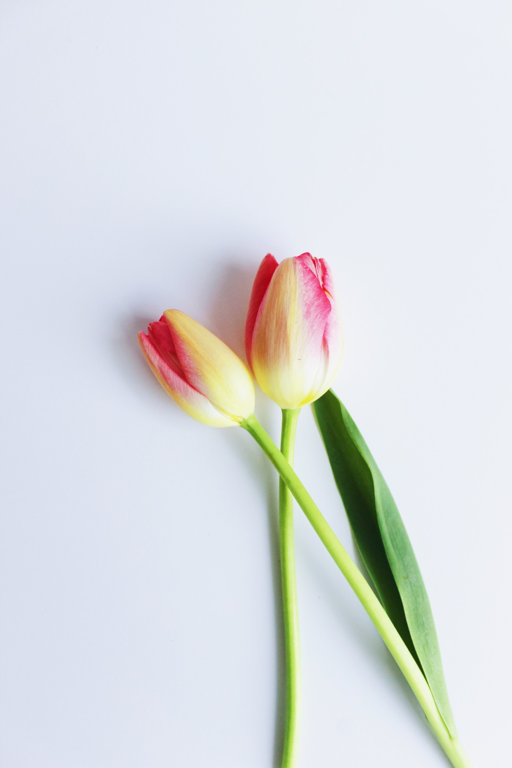 Friday Flowers - Red and Yellow Tulips | Sundays and Somedays