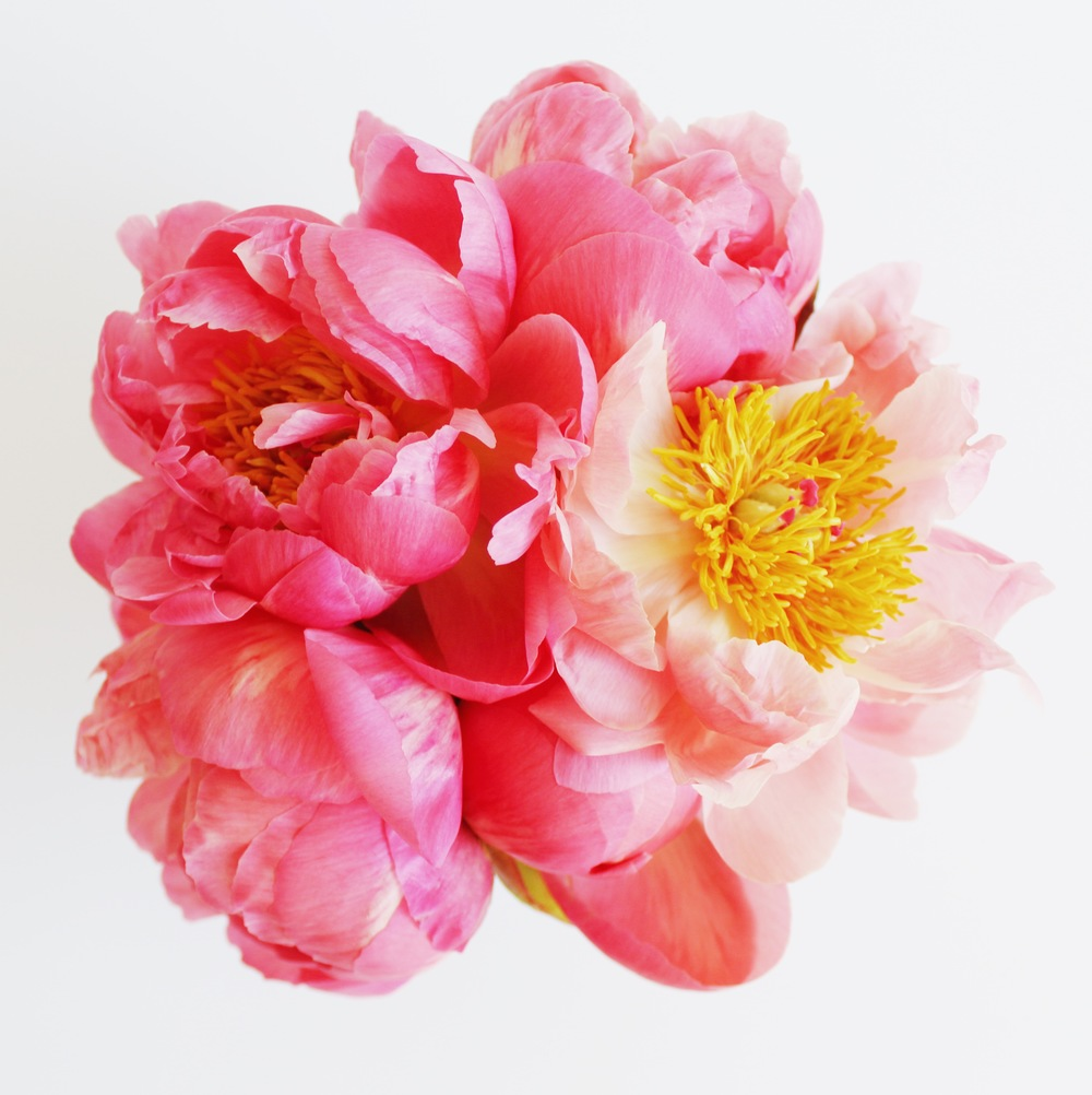 Pink Peonies for Flower Friday | Sundays and Somedays