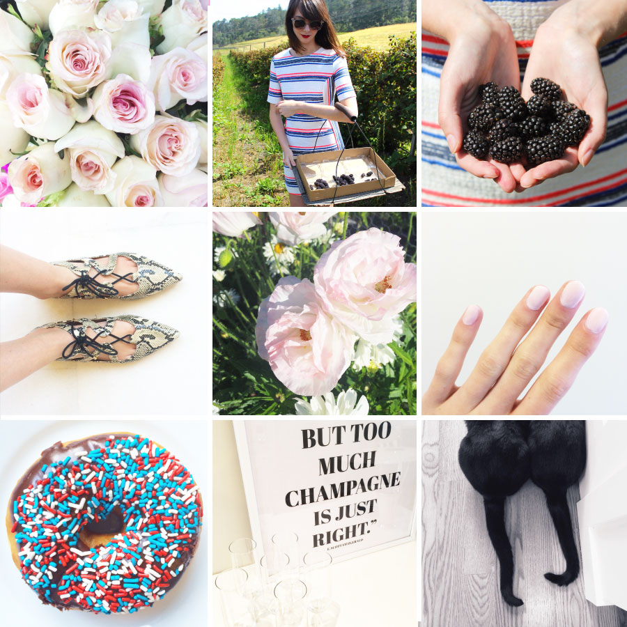 June in Photos - Pink Petals, Berry Picking and Sprinkles | Sundays and Somedays