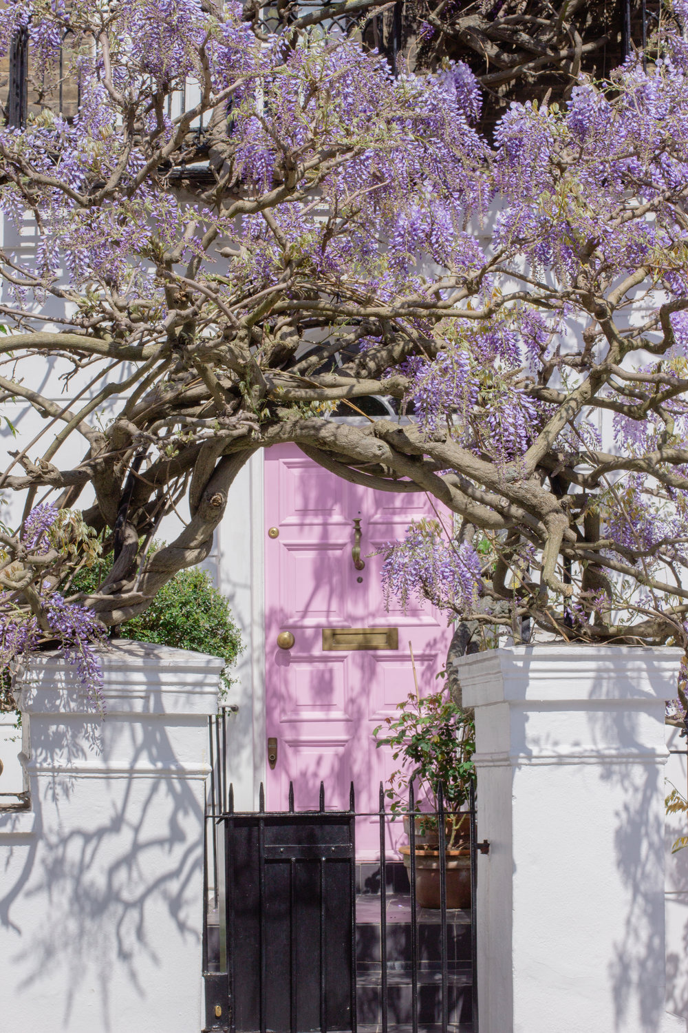 That pink house. The best wisteria hysteria spots in London | Sundays and Somedays