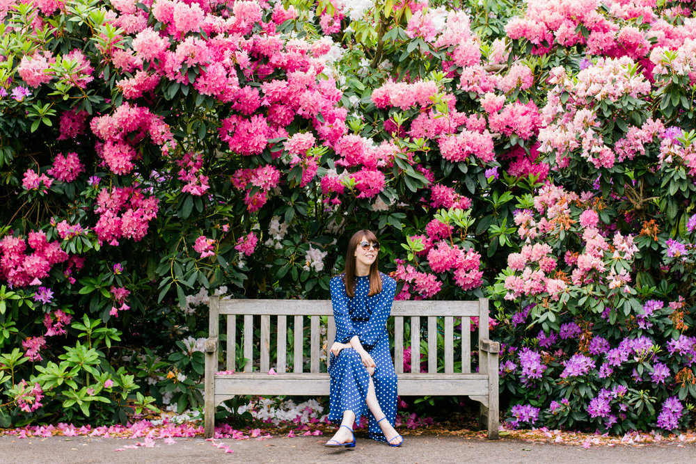 Pink and purple rhododendrons flowers at Kenwood House in Hampstead Heath, London | Sundays and Somedays