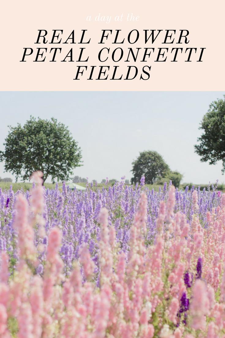 Flower Petal Confetti Fields Outside of London