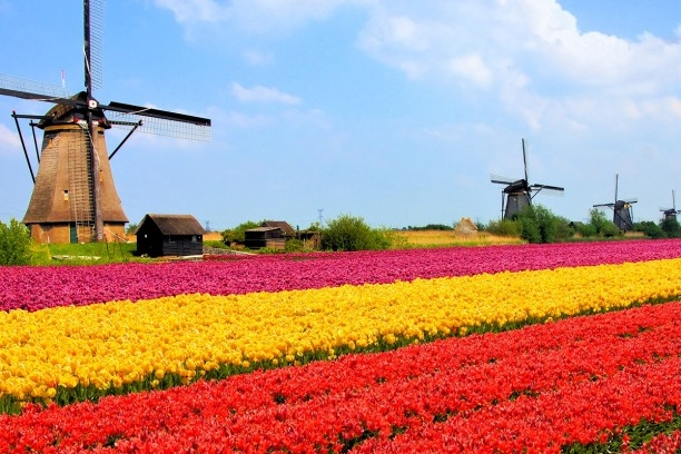 netherlands-tulip-fields-ngsversion-1412611022288.jpg