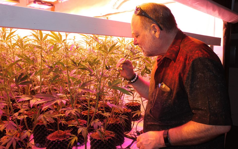 Prapanna Smith, a former school administrator, tends to his cannabis plants during what's likely to be his last permitted growing cycle in Calaveras County. (Peter Hecht for Leafly)