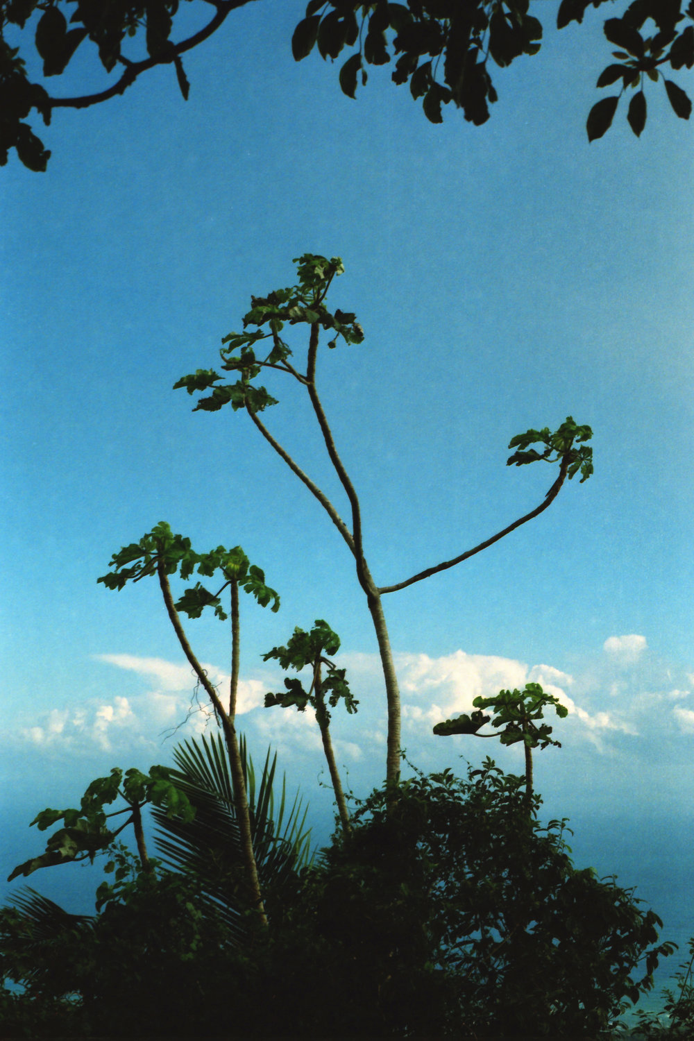 cloud-tree.jpg