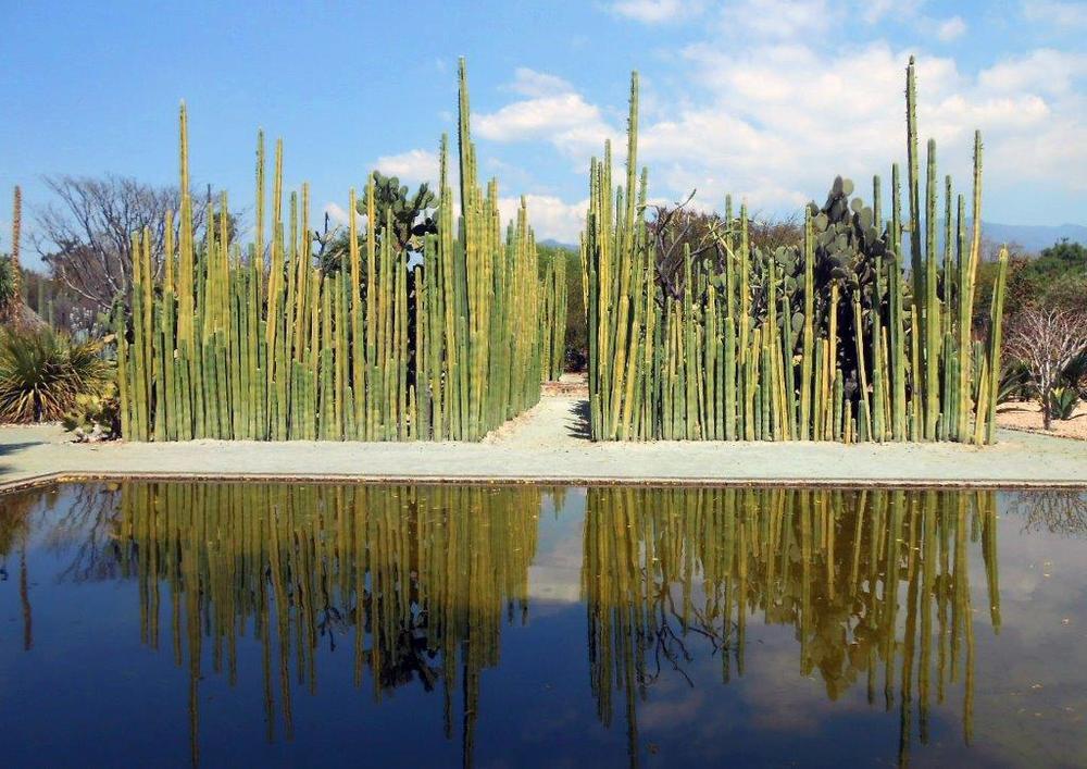 Jardin Botanico (30).jpg