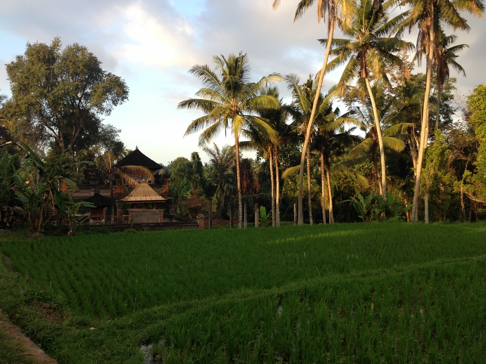 rice paddies, ubud, bali